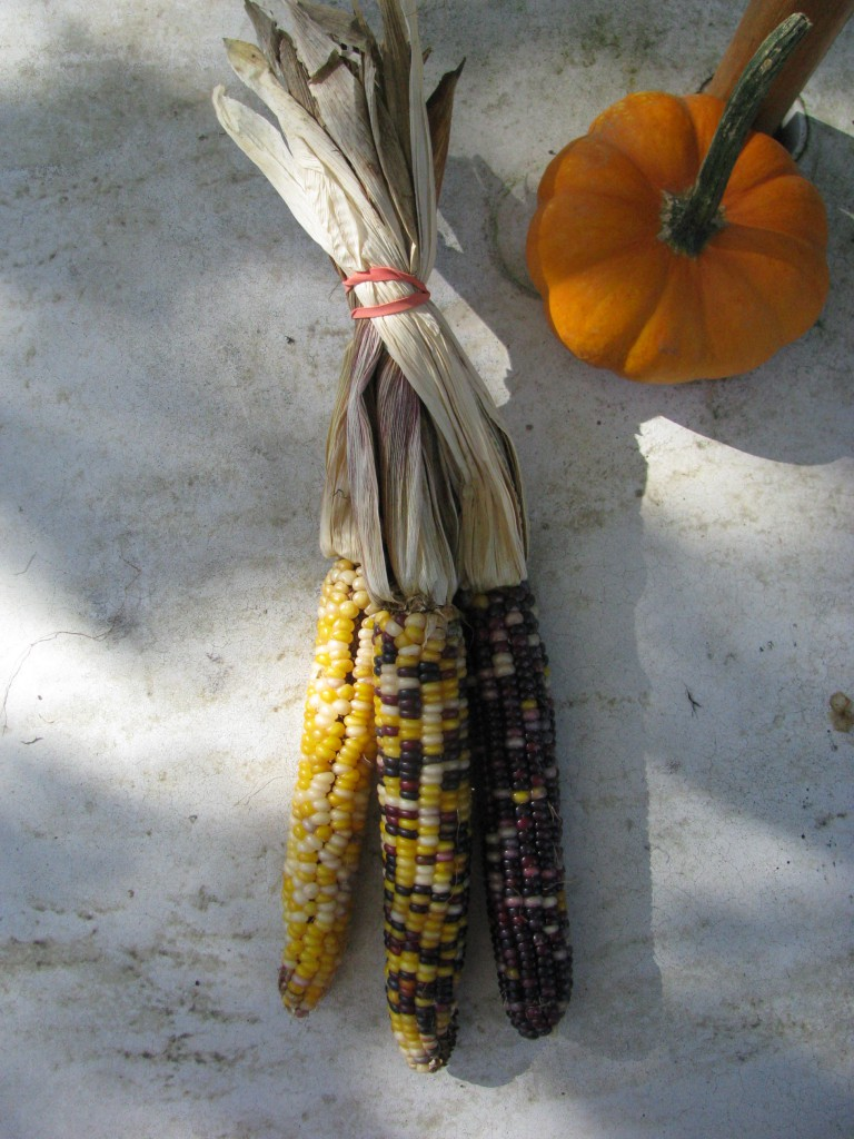 Indian corn before.