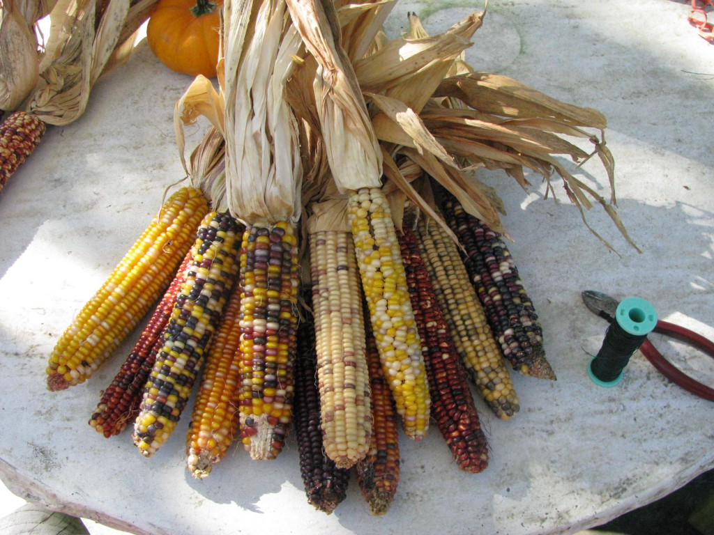 Indian corn assembly.