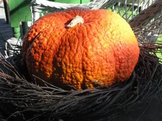 Unique Product Selections for Autumn
